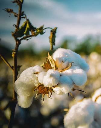 Survêtement en coton homme